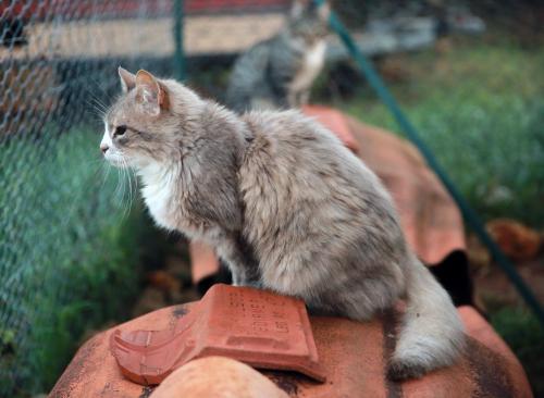 Необычные и редкие клички для котов