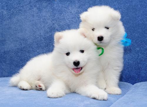 Клички для белых собак