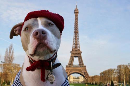 25 французских пород собак