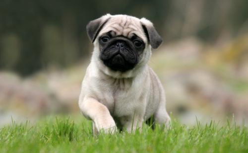 Породы собак до 10 кг