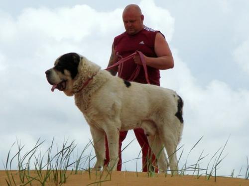 видео про собаку алабай