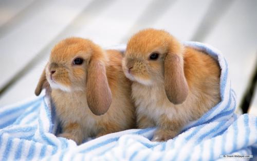 Разведение домашних кроликов