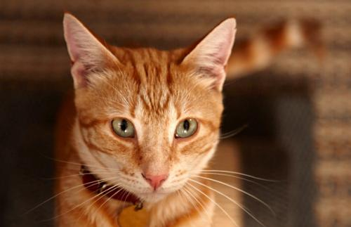 Aggression in cats when caressing and caressing.