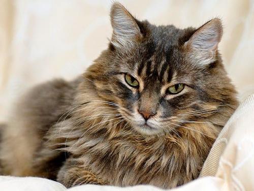 Как принять решение об усыплении кошки