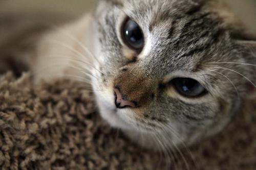 Метеоризм и газы у кошки