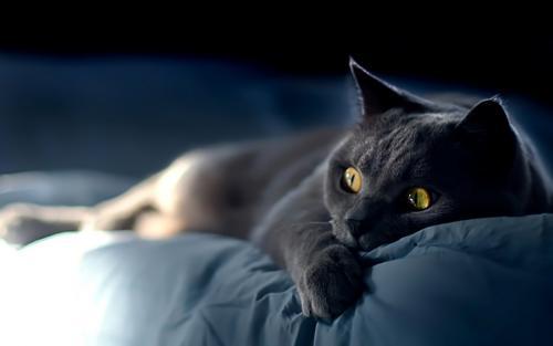 20 расходов, связанных с содержанием кошки