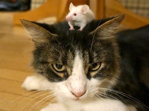 Анорексия у кошек