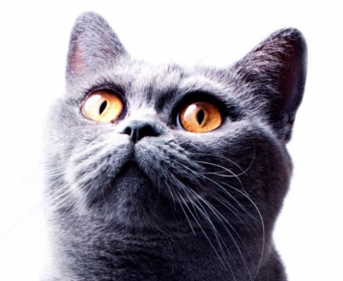 Прикольные клички для котов
