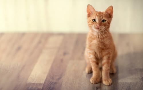 Простые клички для кошек и котов