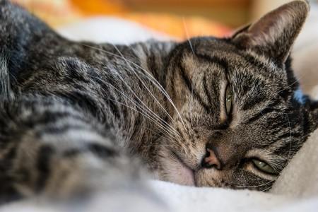 Боли у кошек - симптомы и лечение