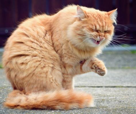 Почему кошка чихает - причины и лечение.