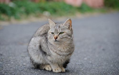 Опасность, которая может поджидать кошку на улице