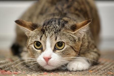 Стресс у кошек - причины, симптомы и лечение