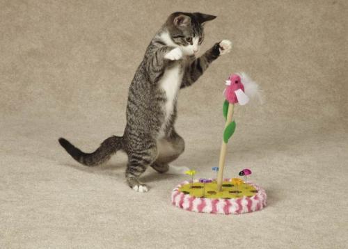 5 secrets to make a cat happy