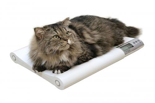 Средний вес кошки