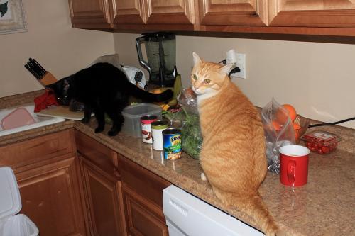 Что делать и как отучить кошку лазить по столам
