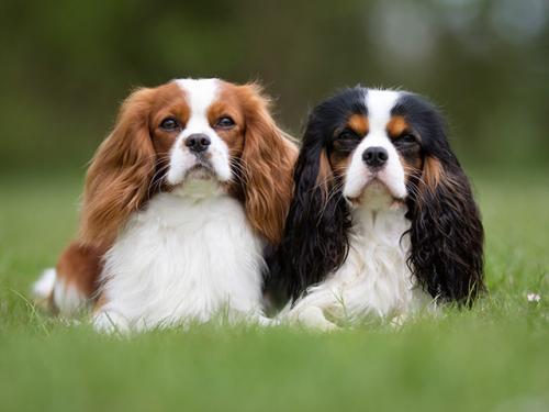 10 лучших маленьких пород собак для детей