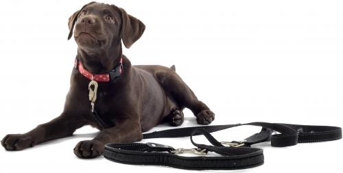 Ошейник, упряжка, поводок - что необходимо вашей собаке?