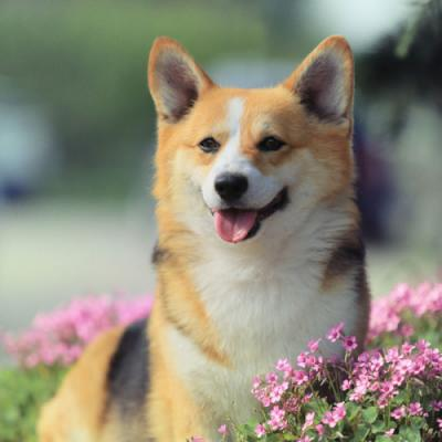 Красивые клички для собак девочек