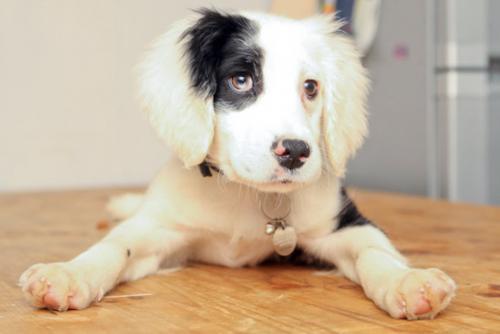 Жизнь с глухой собакой