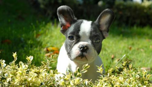 Можно ли наказывать собак и кошек