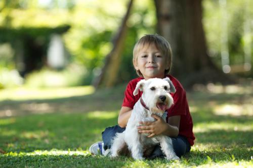 животные для детей