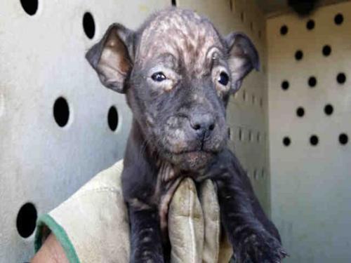 Фото демодекозу у собак