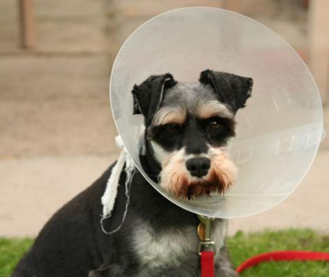 Как применять мази, кремы и лосьоны для собак