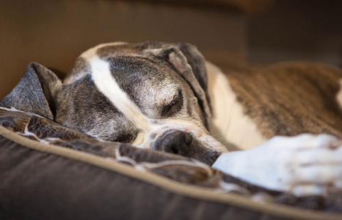 Как принять решение об усыплении собаки