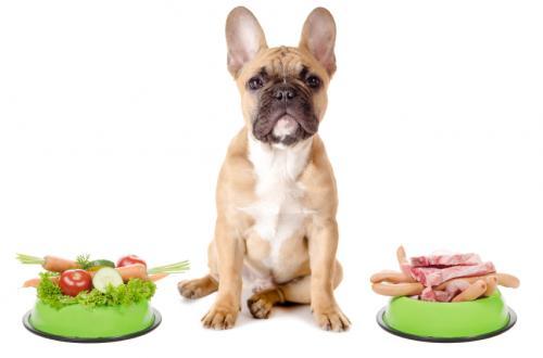 Домашняя еда для собак