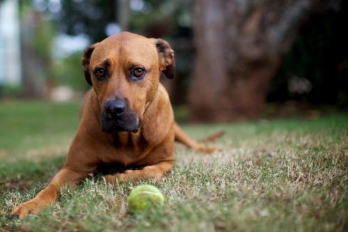 Собака проглотила инородное тело - симптомы и лечение