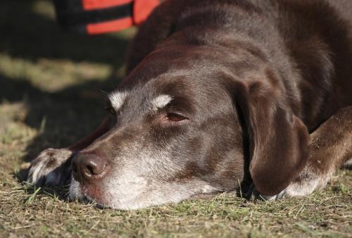 Качество жизни собаки