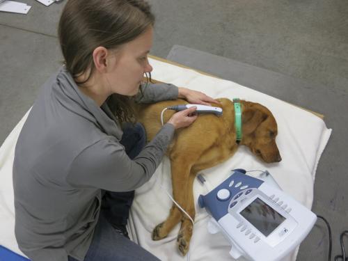 Терапевтический ультразвук для животных