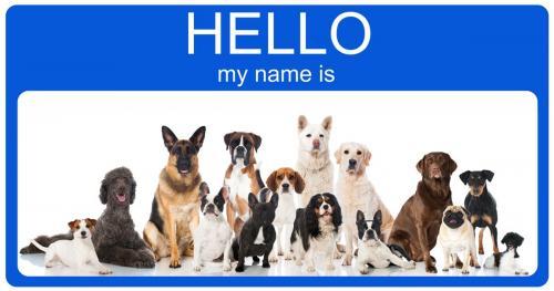 Американские клички для собак и щенков
