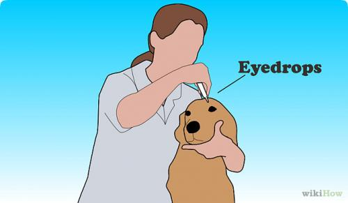 Как применять глазные капли для собак