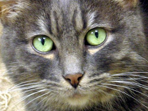 Глазные инфекции у собак и кошек