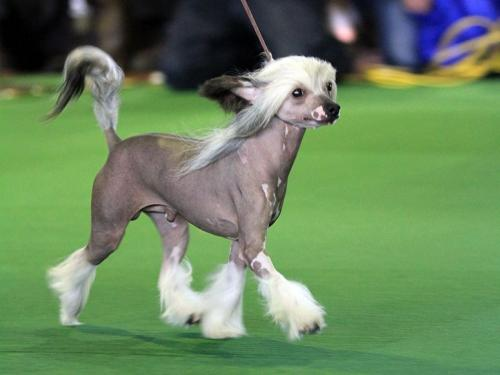 7 most unusual and unique dog breeds