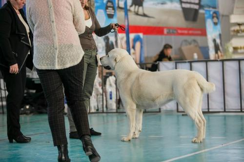 Выставки собак в Московской области (МО)