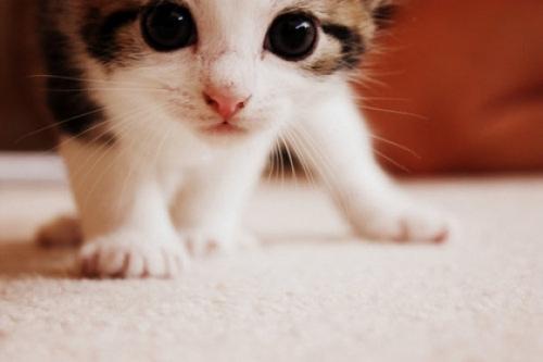 Котенок в новом доме