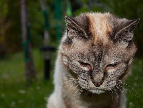 Забота о старых кошках