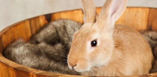 Уход за кроликом по месяцам