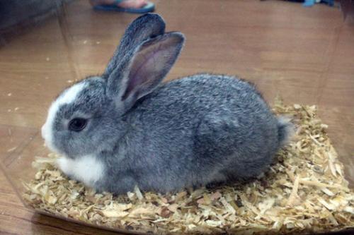 Содержание домашних кроликов