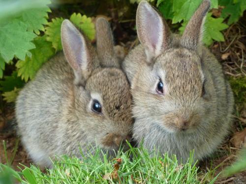 8 распространенных мифов о кроликах