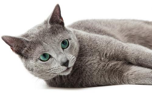 Русские клички для котов и кошек, для маленьких котят