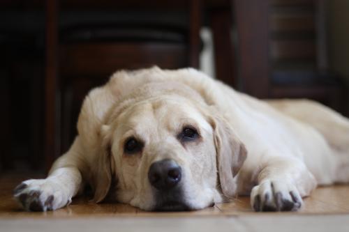 Кормление старых собак