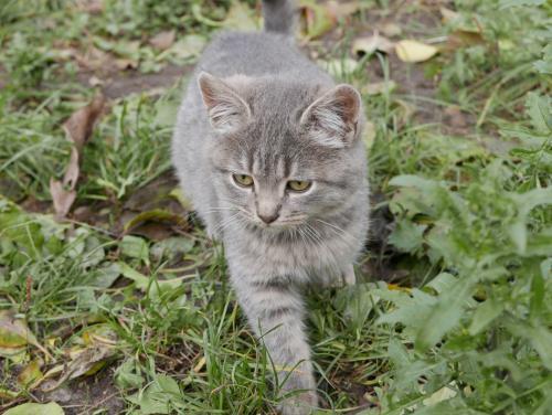 Имена для серых котов