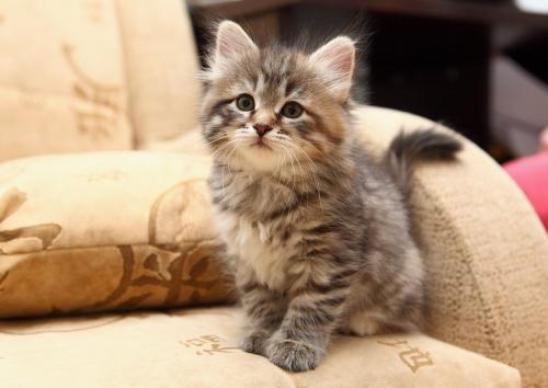 Имена для сибирских котов? кошек