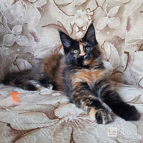 Имена кошек английских пород