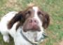 Анафилактический шок у собак