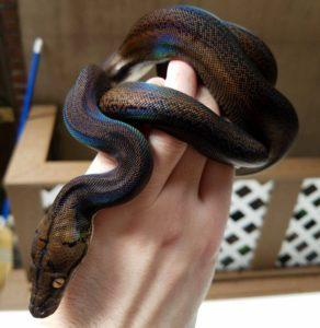 300+ красивых имен для змей